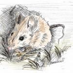ALSACE | REICHSHOFFEN | ANIMAUX | OUTDOORSKETCH | PEINTUREMAMANLOTUS-AC | souris