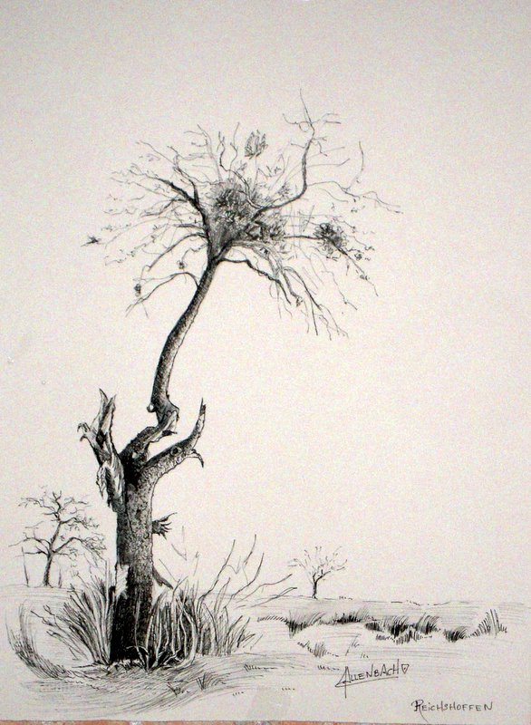 allenbach-christiane-dessin-arbre-de-reichshoffen