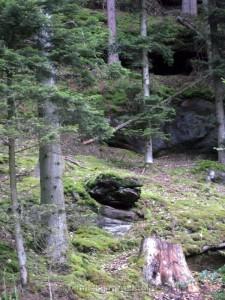 ALLENBACH CHRISTIANE MON BOUT DE FORET