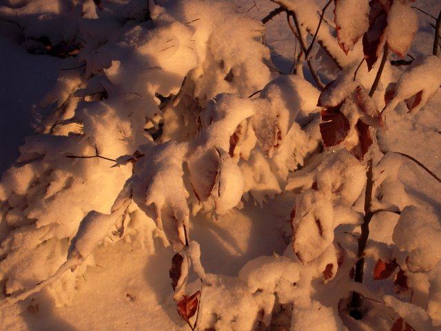 allenbach-christiane-neige-2j-100