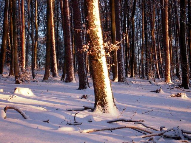 allenbach-christiane-neige-2j-101