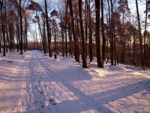 allenbach-christiane-neige-2j-102