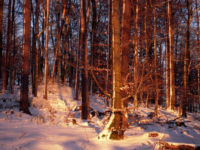 allenbach-christiane-neige-2j-103