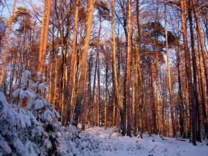 allenbach-christiane-neige-2j-106