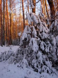 allenbach-christiane-neige-2j-107
