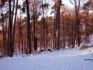 allenbach-christiane-neige-2j-108