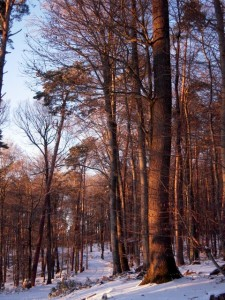 allenbach-christiane-neige-2j-109