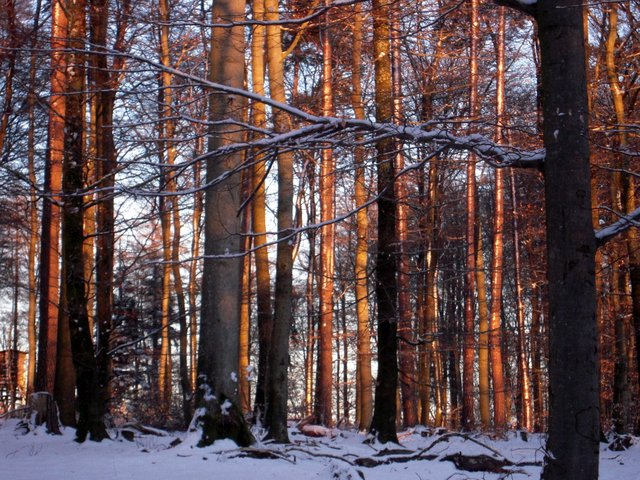 allenbach-christiane-neige-2j-111