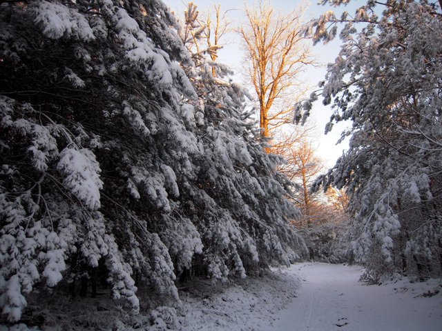 allenbach-christiane-neige-2j-112