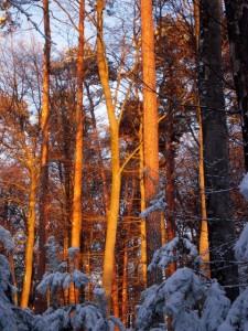 allenbach-christiane-neige-2j-113