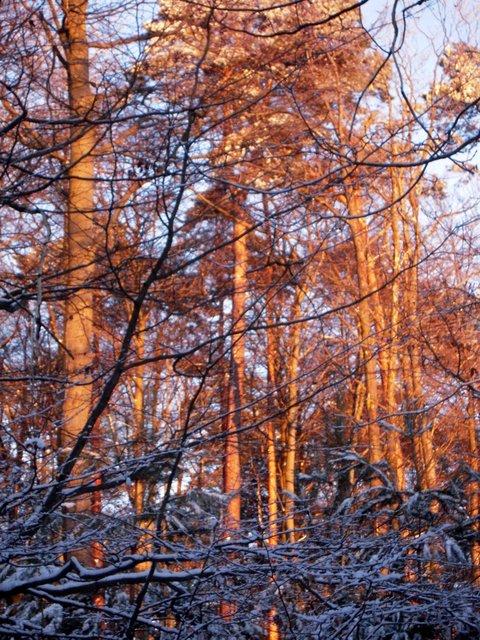 allenbach-christiane-neige-2j-114