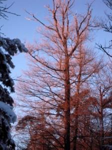 allenbach-christiane-neige-2j-116