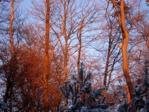 allenbach-christiane-neige-2j-118