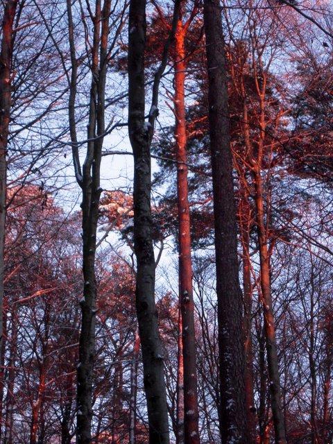 allenbach-christiane-neige-2j-122