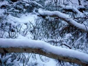 allenbach-christiane-neige-2j-16