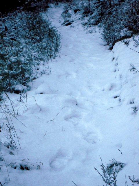 allenbach-christiane-neige-2j-17