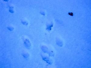 allenbach-christiane-neige-2j-44