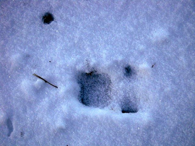 allenbach-christiane-neige-2j-45