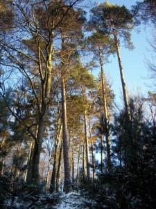 allenbach-christiane-neige-2j-47