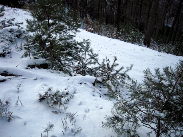 allenbach-christiane-neige-2j-49