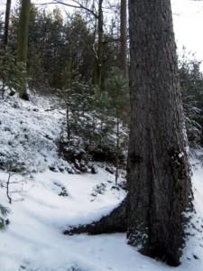 allenbach-christiane-neige-2j-51