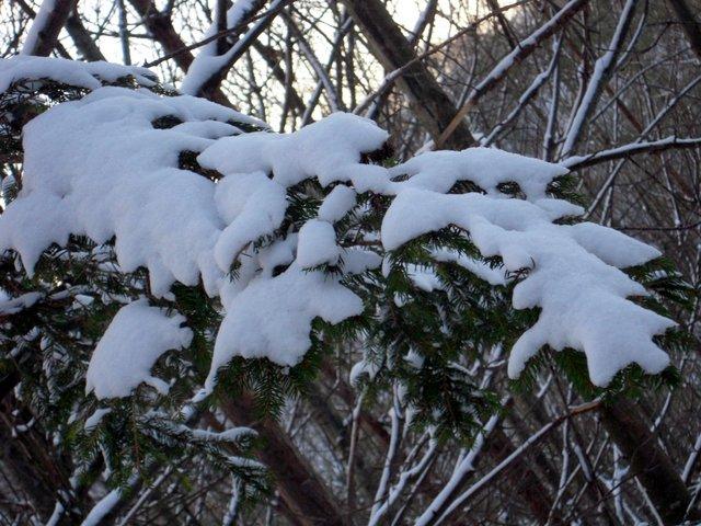 allenbach-christiane-neige-2j-56