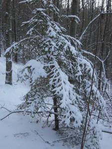 allenbach-christiane-neige-2j-57