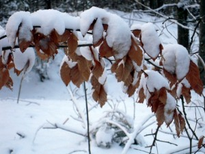 allenbach-christiane-neige-2j-58