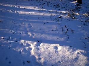 allenbach-christiane-neige-2j-60