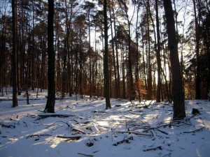allenbach-christiane-neige-2j-63
