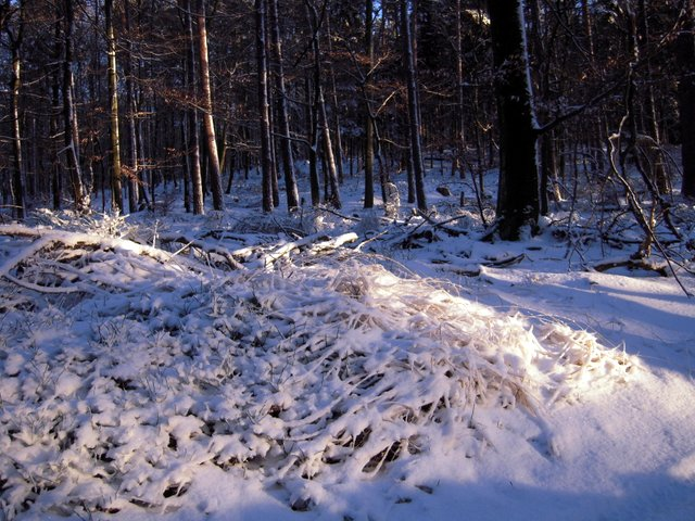 allenbach-christiane-neige-2j-65
