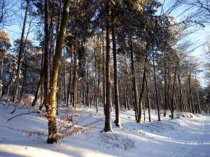 allenbach-christiane-neige-2j-69