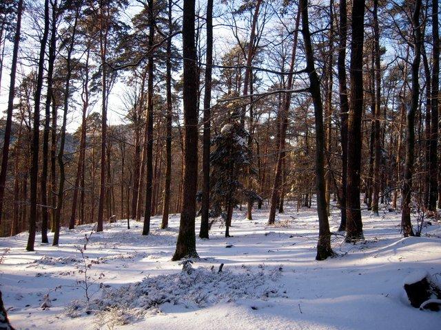 allenbach-christiane-neige-2j-70