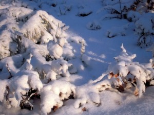 allenbach-christiane-neige-2j-72