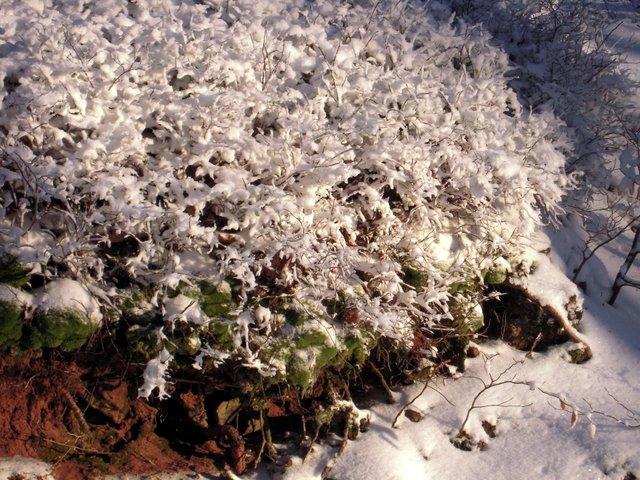 allenbach-christiane-neige-2j-73