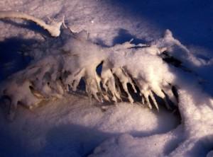 allenbach-christiane-neige-2j-76