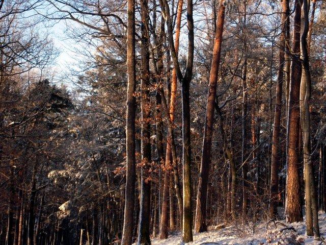 allenbach-christiane-neige-2j-80