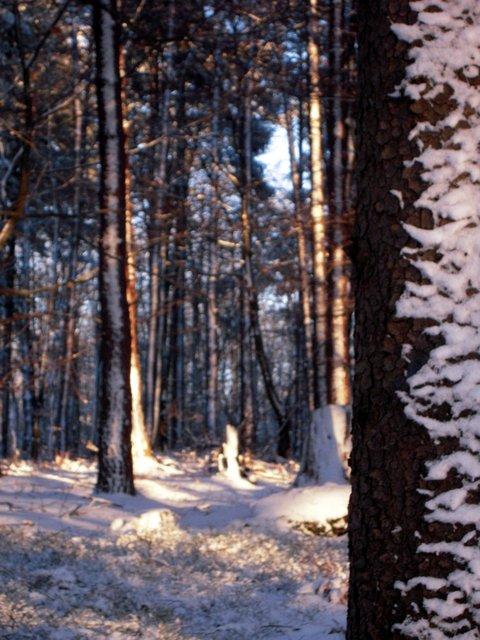 allenbach-christiane-neige-2j-81