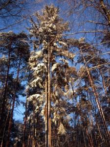 allenbach-christiane-neige-2j-82