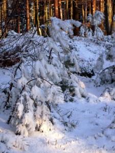 allenbach-christiane-neige-2j-84