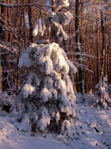 allenbach-christiane-neige-2j-87