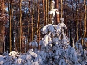 allenbach-christiane-neige-2j-88