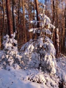 allenbach-christiane-neige-2j-89