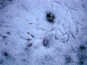 allenbach-christiane-neige-2j-9