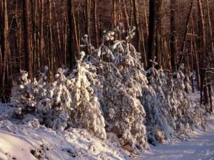 allenbach-christiane-neige-2j-90
