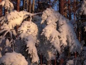 allenbach-christiane-neige-2j-91