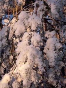 allenbach-christiane-neige-2j-92