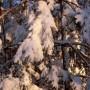allenbach-christiane-neige-2j-93