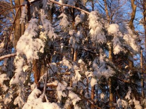 allenbach-christiane-neige-2j-94