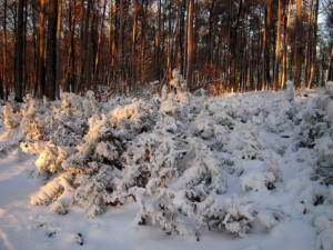 allenbach-christiane-neige-2j-97